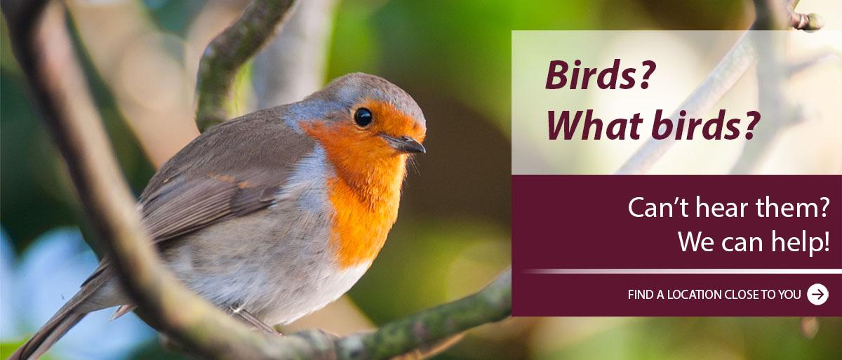 Birds-WhatBirds1